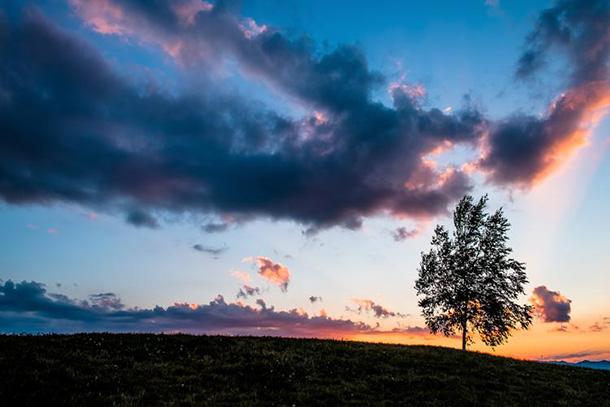 日が落ちた草原と一本の木(美瑛)