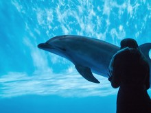 水族館のイルカと水槽越しの女性