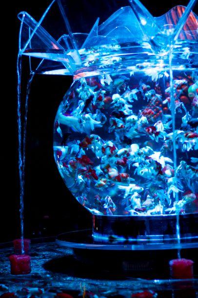 art-aquarium-01