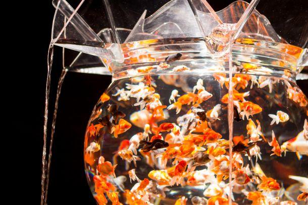 art-aquarium-02