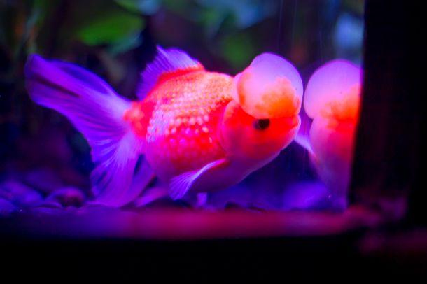 art-aquarium-03
